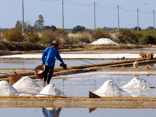 Việc thu hoạch muối diễn ra khẩn trương đề phòng thời tiết thay đổi bất chợt