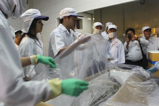 Cá ngừ đại dương được đóng gói để xuất khẩu sang Nhật Bản.