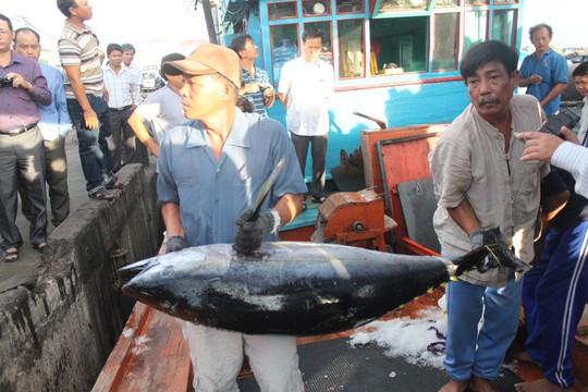 Ngư dân đưa cá ngừ đại dương đánh bắt theo kiểu mới lên bờ