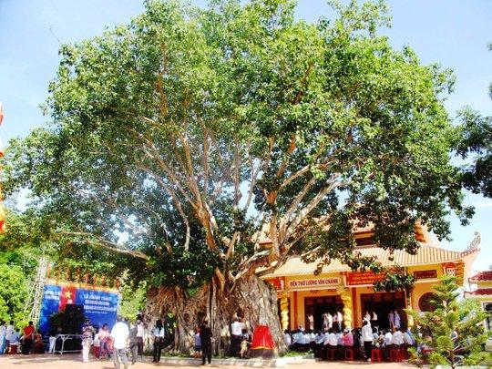 Cây bồ đề trước đền thờ thành hoàng Lương Văn Chánh
