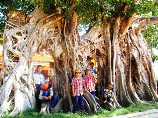 Cây có 4 chùm rễ tạo thành 3 lối đi vào đền rất độc đáo