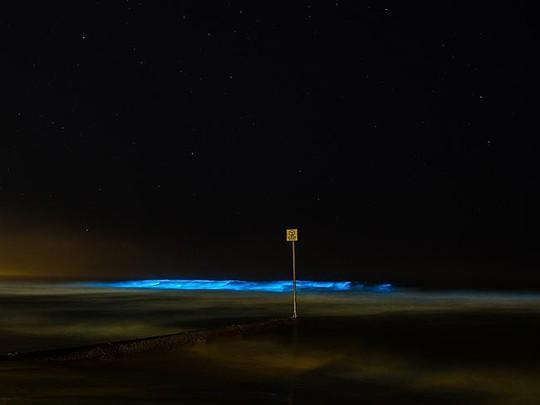 Sinh vật lạ phát sáng trong đêm gây xôn xao dư luận trước đó