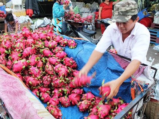 Thanh long Bình Thuận rớt giá thê thảm vì xuất khẩu sang Trung Quốc gặp khó