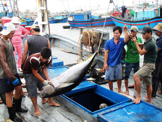 Ngư dân chuyển cá ngừ đại dương từ tàu lên bờ