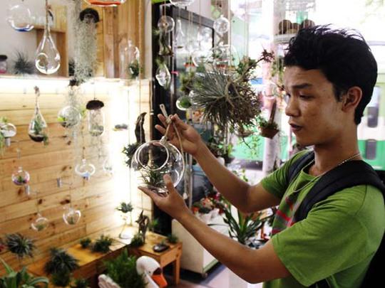 """Đến lượt dân Sài Gòn mê tít """"cây không khí"""""""