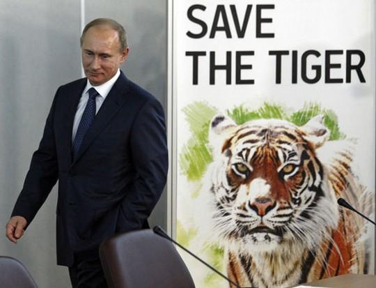 Ông Putin và chiến dịch bảo vệ loài hổ Siberia. Ảnh: Imagine China