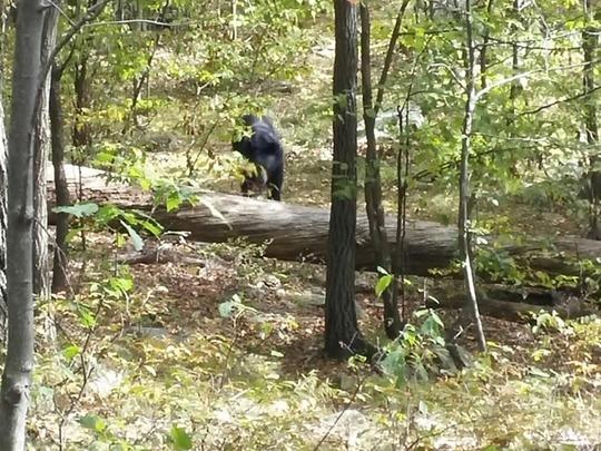 1 trong 5 tấm ảnh Patel chụp con gấu. Ảnh: New York Post