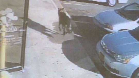 Chú chó bỏ chạy sau khi trúng đạn và gục chết sau một tòa nhà. Ảnh: WUSA9