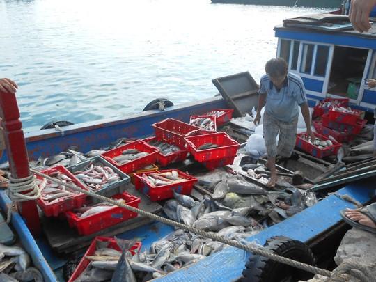 Sau 1 ngày lấy hên, tàu của ngư dân Lý Sơn đầy ắp cá