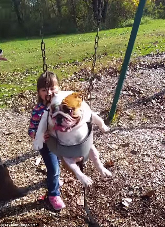 Happy days: In the funny footage, Ozzy appears to love his foray on the swing set