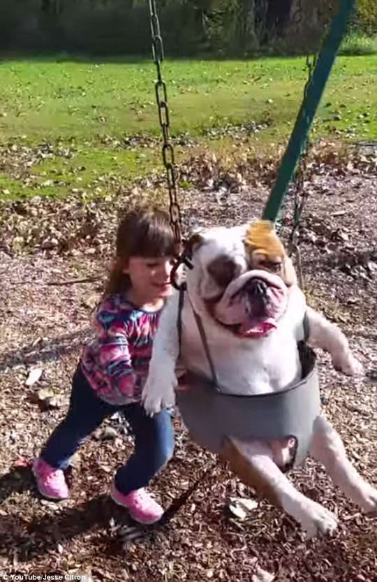 Playtime: Ozzy is still just a pup and turned one-year-old in October, so its fitting he went in the childs swing