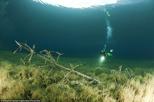 The images show how a summer park becomes a lake each spring complete with underwater trees