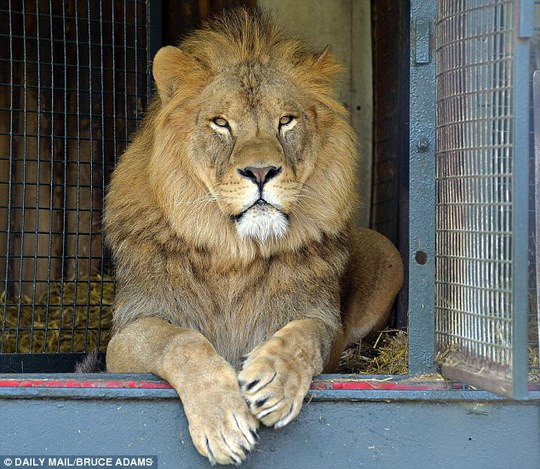Đây là lần đầu tiên các thanh tra y tế Anh bắt gặp một con sư tử chết trong tủ lạnh nhà hàng. Ảnh: Daily Mail