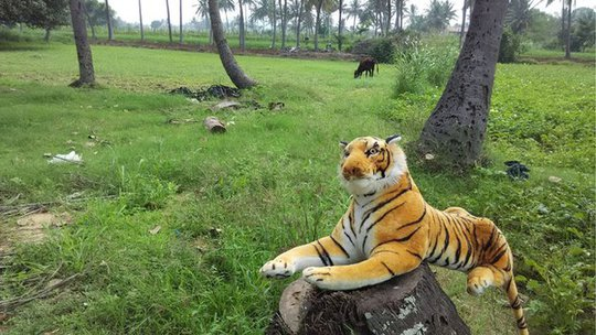 India stuffed toy tiger in a farm in Karnataka
