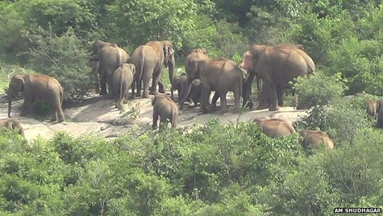 Marauding elephants in Karnataka