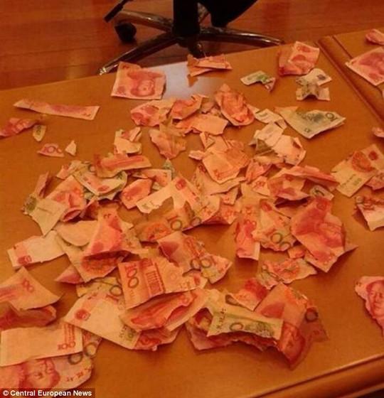 Số tiền tiết kiệm bị cậu bé 4 tuổi xé rách. Ảnh: Central European News