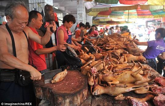 Người dân thành phố Ngọc Lâm - Trung Quốc giết mổ thịt chó công khai.
