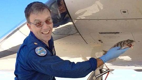 Chiếc máy bay Gulfstream G-IV hủy cất cánh vì một con cá. Ảnh: AP