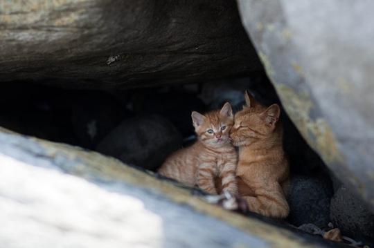 Khoảnh khắc yêu thương thật bình yên của những chú mèo. Ảnh: Fubiral