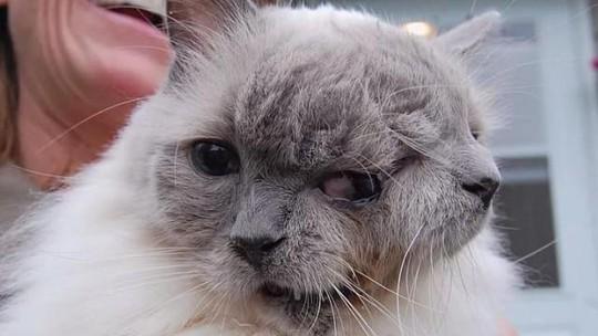 Mèo hai mặt già nhất thế giới qua đời