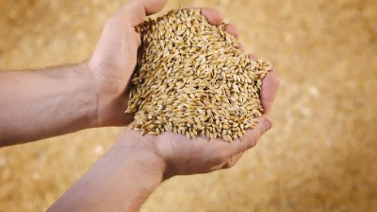 Russia opens up its grain market