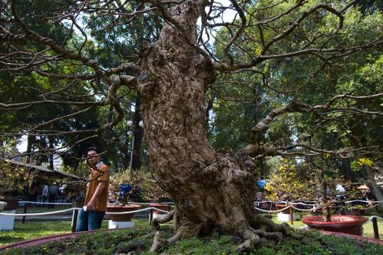 Nghệ nhân cho biết việc chăm sóc cây mai này cũng bình thường như những cây mai khác. Hiện đã có người đến hỏi mua, trả giá gần chạm mốc 2,5 tỷ đồng nhưng nghệ nhân Phan Văn Lớn chưa đồng ý bán.