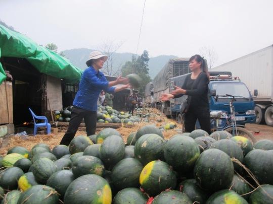 Các chủ hàng Việt Nam đành đánh hàng về và mang ra bên hông cửa khẩu Tân Thanh bán tháo với giá rẻ mạt: 5-7 ngàn đồng/quả dưa hấu