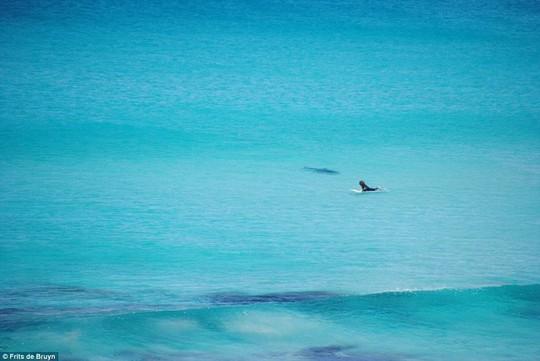 Con cá mập bất ngờ bơi hướng khác