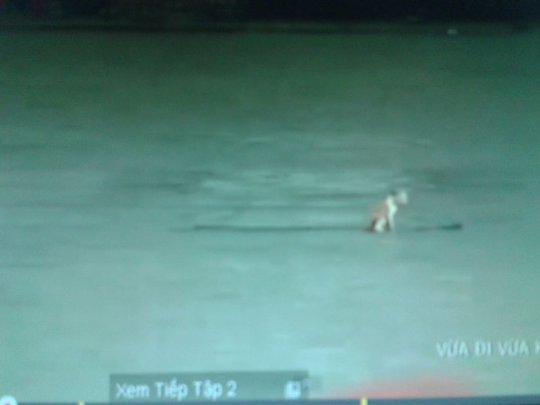 Hình ảnh chú mèo bị thả trôi sông trong phim