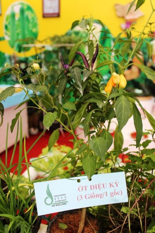 Cây ớt diệu kỳ, 1 gốc ra 3 giống khác nhau.