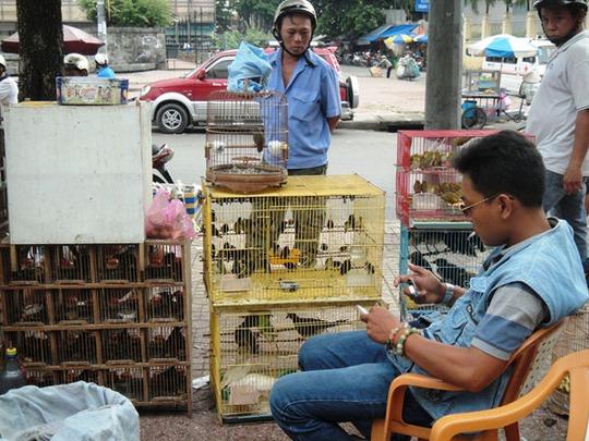Dân buôn thường kiếm cả chục triệu đồng mỗi khi bán được chim độc, lạ cho các đại gia.