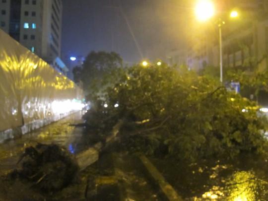Trận mưa giông đã khiến cây ở đường Láng Hạ, quận Đống Đa bật gốc đổ ngang ra đường tối 4-6. ảnh Văn Duẩn