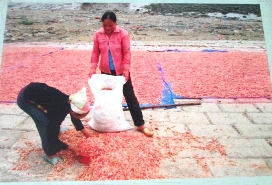 Nhiều bức ảnh chụp cảnh lao động của người nông dân