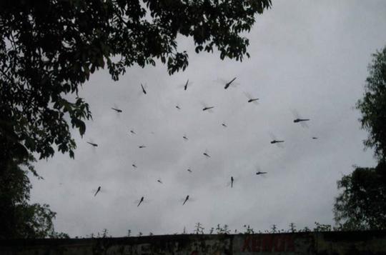 Sự xuất hiện của chuồn chuồn báo hiệu mưa có thể đến trong vài giờ tới Ảnh: Al Jazeera