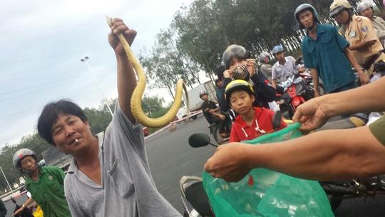 Người dân cho hay đã bắt lại hơn 1 trăm con rắn trong đó có rắn nước