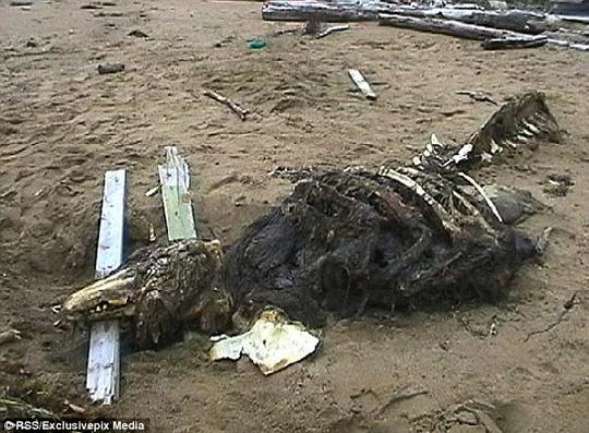 """Giải mã xác chết """"quái vật"""" dạt bờ biển Nga"""
