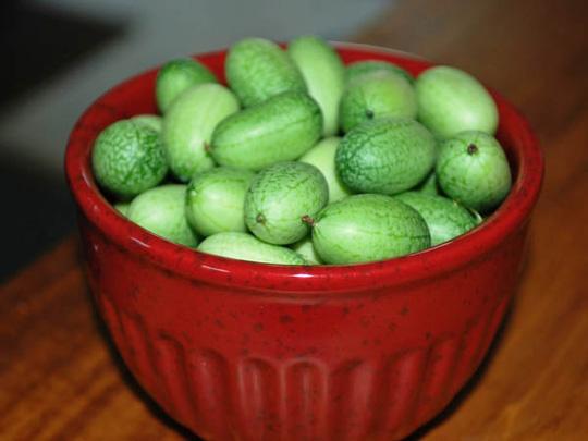 Dưa hấu tí hon có kích thước bằng trái nho, bán ra với giá gần 1,5 triệu đồng/kg.