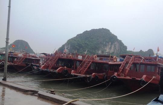 Tàu thuyền neo đậu tại nơi tránh trú bão ở Vân Đồn, Quảng Ninh