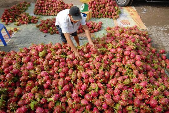 Giá trái cây cuối vụ tăng mạnh nhưng nông dân chẳng còn hàng để bán. Ảnh Ngọc Trinh.