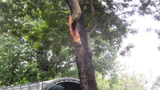 TP HCM: Nhánh cây rơi làm bị thương 2 phụ nữ