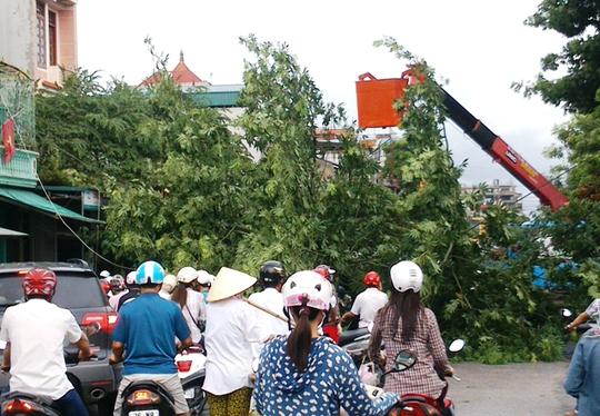 Cây xanh đổ ngang đường Tống Duy Tân, khiến giao thông qua đây bị tê liệt