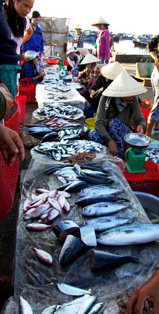Chợ cá ven đầm Cù Mông chỉ họp nhanh trong buổi sáng sớm. Đến khi nắng lên cao, chợ cũng vắng dần. Trong ảnh: Hàng cá kéo dài từ bến cá ra đến giữa chợ.
