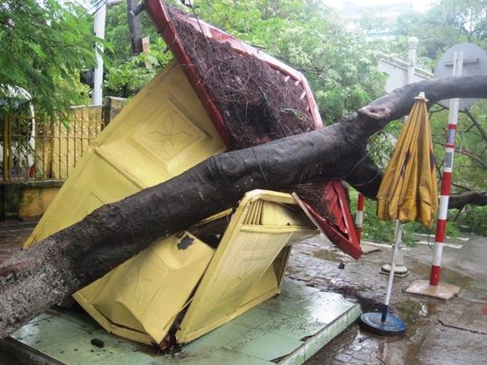 Cây phượng đổ đè bẹp bốt CSGT trên đường Bà Triệu - Nguyễn Trường Tộ ở TP Thanh Hóa