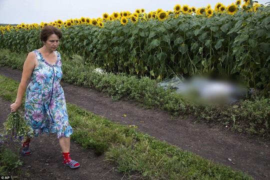 Một phụ nữ đi qua thi thể một hành khách rơi xuống gần ngôi làngRozsypne - Ukraine.
