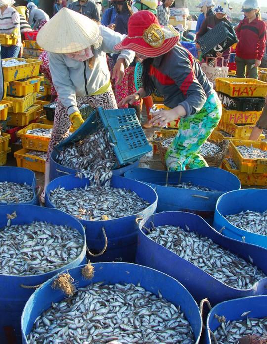 Mỗi giỏ cá dò có giá khoảng 30.000 đồng. Sau một đêm ra khơi, một thuyền nhỏ có thể thu nhập được vài triệu đồng.