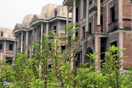 Được biết, nguyên nhân khiến cả khu đô thị bỏ hoang là do phần lớn khách hàng không thể giao đủ số tiền mua nhà sau khi công trình hoàn thiện từ cuối năm 2012. Hiện nay, ở các khu xây dở dang chỉ mới xong phần thô là cây cỏ mọc um tùm.