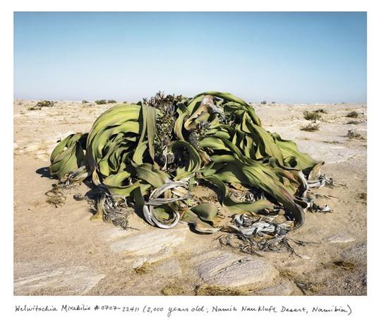Những sinh vật sống lâu nhất hành tinh