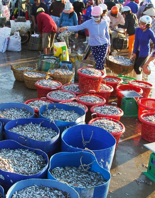 Trong một buổi sáng, hàng tấn cá dò từ chợ này được chuyển lên xe chở đi các nơi để tiêu thụ.