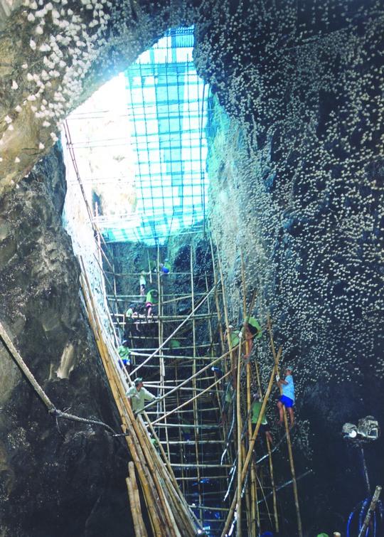 Khai thác yến đảo thiên nhiên tại hang yến ở Khánh Hòa