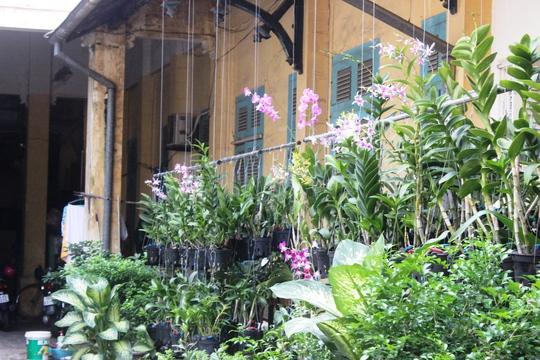 Khoảng sân sau ngôi biệt thự, được trồng rất nhiều loại lan rừng